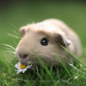 Травяной- сбор- омолаживающий