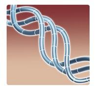 new-collagen-fibers